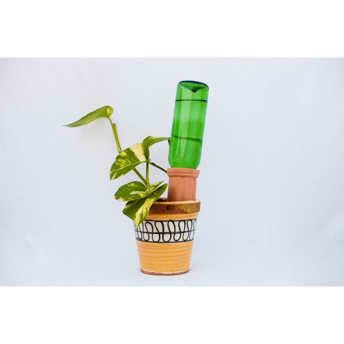 Kandy Plant Buddy (Pack of 4)